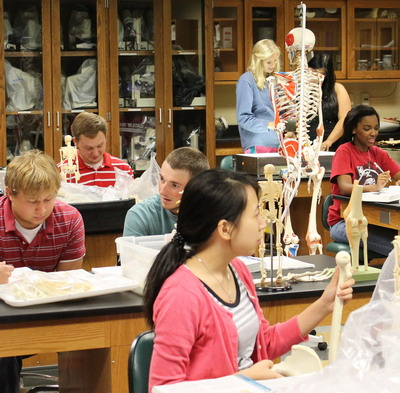 Students working in a Biol 217 Human A&P lab