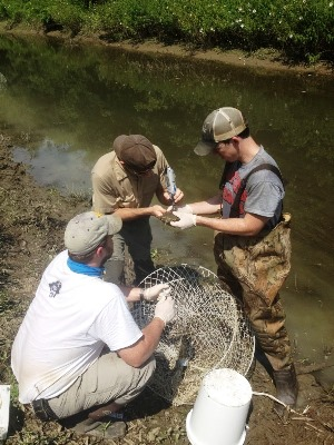 Dr. James Moore working this summer with turtles.